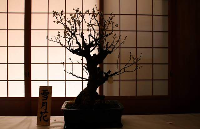 Popular in oversea like a real Tatami for Bonsai Plamodel!