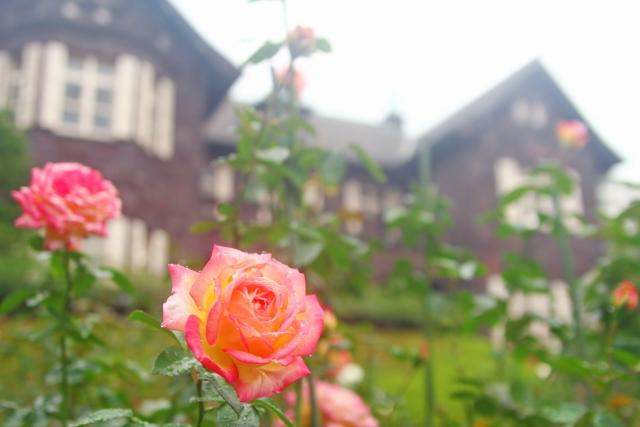 "European house with ""Tatami"" Beautiful harmony of Japanese and European style Kyu-Furukawa Garden"