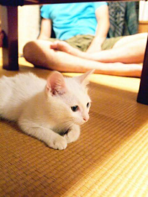 Develop the new anti-mold tatami for pets