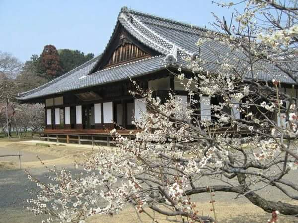 """Kodokan"" shining with plum and cherry blossoms  A tatami floored school to teach the status of Edo"