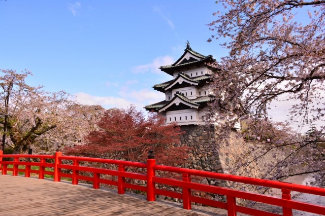 """Views of a garden and  """"Sakura (cherry blossoms) festival"""" from a Japanese room Hirosaki, an attractive town with full of nature"""