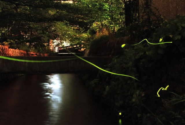 Fireflies light in the summer night The taste of Japanese to think of the Heian period.