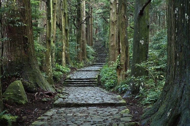 """Let's walk around the world heritage A trip to """"Kumanokodo Road"""" to think about the old days"""