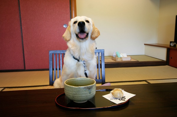 Let's go together! An accommodation to be relaxed with pets
