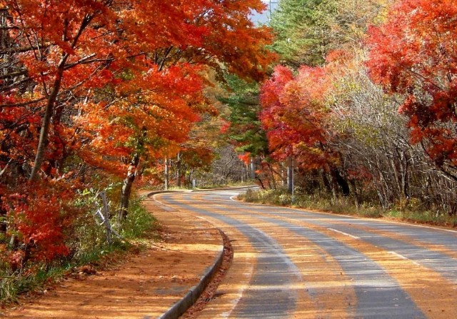 Relax by the autumn leaves, the hot spring, and the tatami The autumn Nikko with the atmosphere of Japan