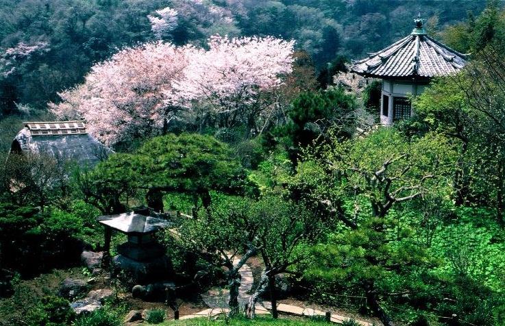 Enjoy four seasons and Japan in Kamakura