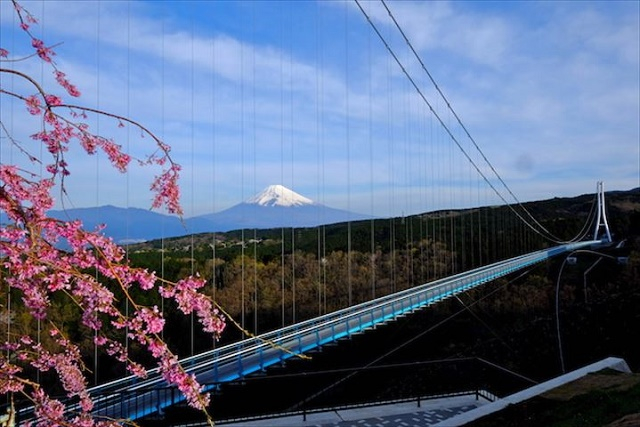 """A popular tourist spot to feel Japan  No.29 Mt. Fuji and Cherry blossoms  """"The best view in Japan"""" and """"Rakuju-no-ma"""" with tasteful Japanese atmosphere"""