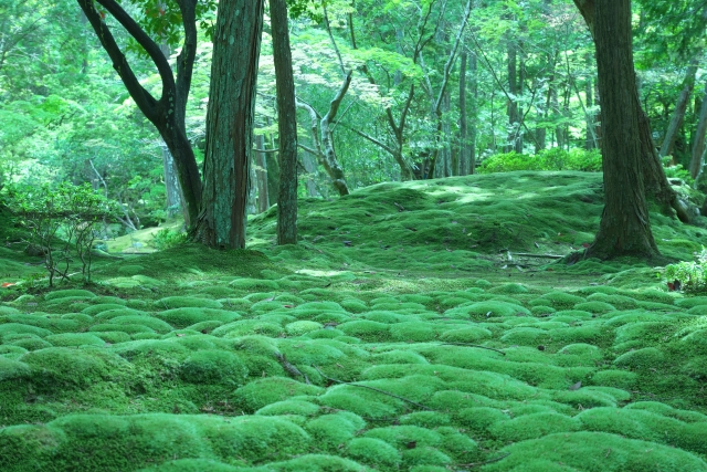 Kyoto Saiho-ji Temple The mossy marvelous garden, the tatami floored main hall, and Japanese atmosphere in the tea room