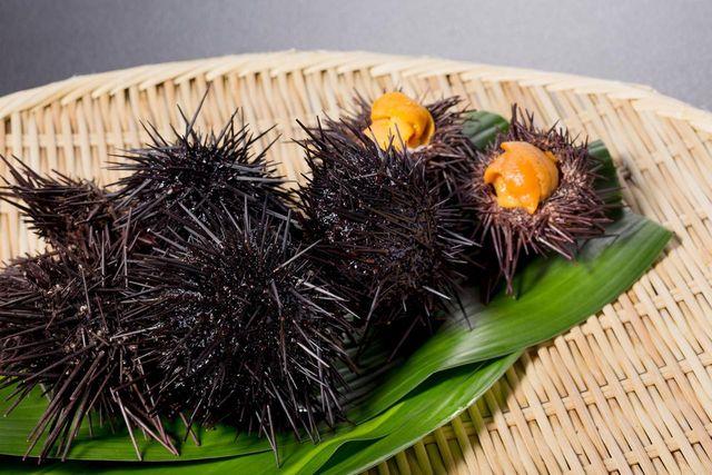 Chase seasonable sea urchins  Enjoy Hokkaido grommets at the beginning of the summer