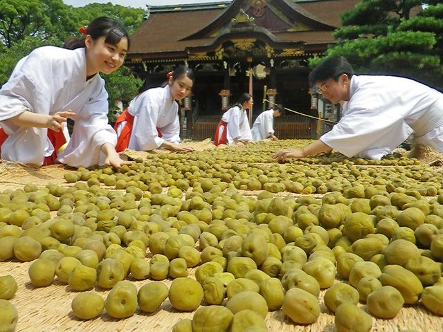 Is it the relation between sweet and sour fruits and learning? Umeboshi in Kitano Tenmangu Shrine in Kyoto