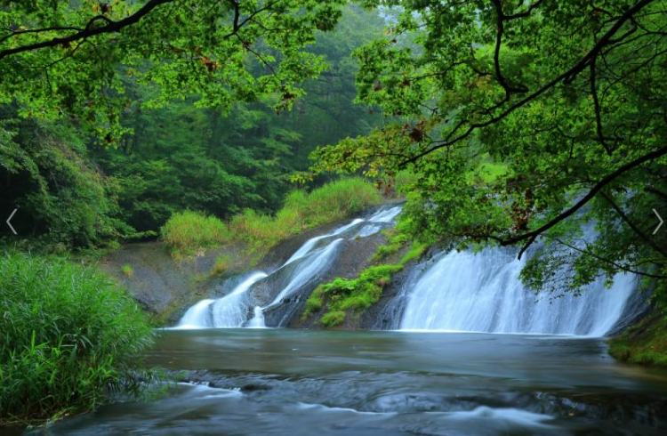"Enjoy Iwate in the early summer Feel the power of nature by ""Kamabuchi falls"" and the fragrance of roses by ""Hanamaki Hot Spring"""