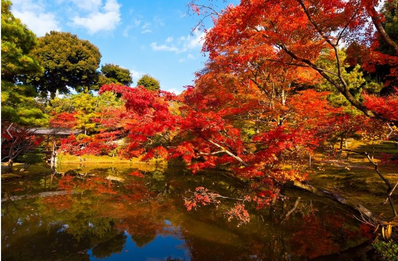 Popular tourist spots to feel Japan   Vol. 44 The temple that Nene, the wife of Hideyoshi TOYOTOMI who was a ruler, sleeps With colored autumn leaves, Koudai-ji Temple and Entoku-in Temple in Kyoto
