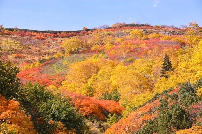 "The Japanese famous mountains that want to go at least once Hokkaido   Mt. Taisetsu-zan ""Souunkyou Hot Spring"" with powerful autumn leaves and the Japanese relaxing atmosphere"