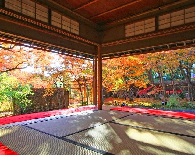 "Popular tourist spots to feel Japan Vol.47 Arashiyama in Kyoto ""Arashiyama Maple Festival"" and ""Special Opening of Hogo-in Temple"" to enjoy colored trees."