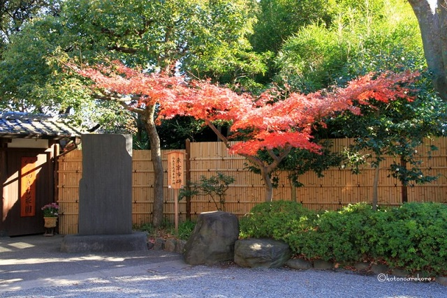 """Active """"Tori-no-ichi (bird day fair)"""" Colorful rakes and autumn leaves that decorate Tokyo in November"""