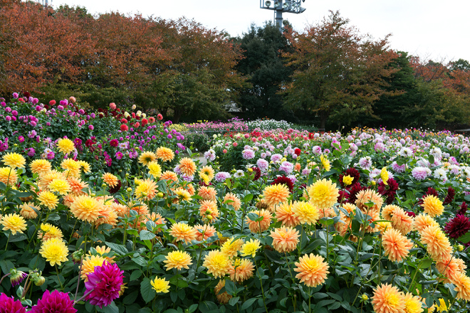 Popular tourist spots to feel Japan   Vol.49 Attractions of blooming seasonable flowers, illuminations, and hot springs Let's go to Kuwana in Mie Prefecture