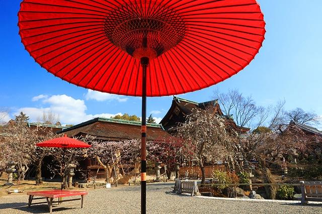 """God of Study"", loved the ume blossoms  The spring atmosphere in Kitanotenmangu Shrine, Kyoto"